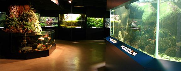 museum d histoire naturelle